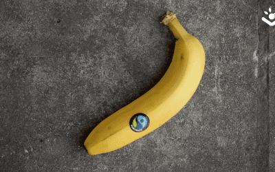 Eerlijk eten: wat is dat? Alles over Fairtrade!