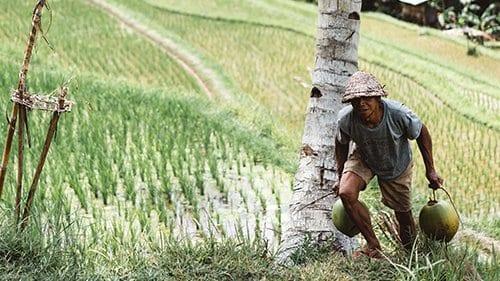 Eerlijk eten: wat is dat? Alles over Fairtrade! 2