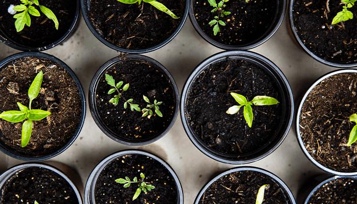 10 tips om duurzaam te eten 4